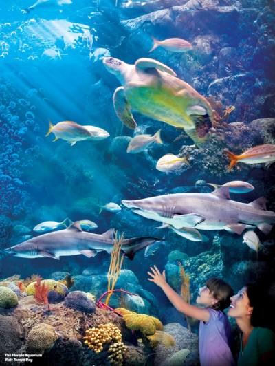 Tampa Bay Buccaneers - Tampa_Florida_Aquarium