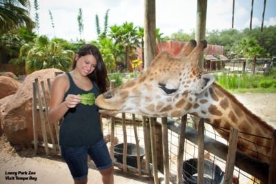 Tampa Bay Buccaneers - Lowry Park Zoo