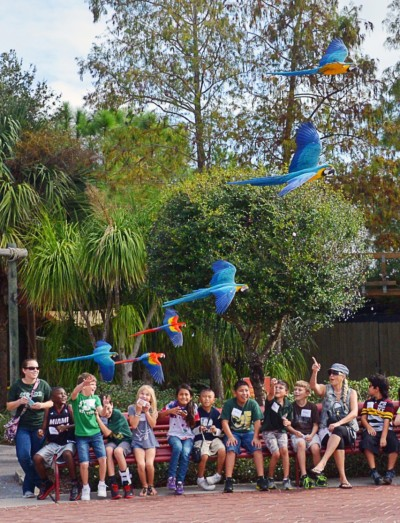 Tampa Bay Buccaneers - Tampa_Zoo_Daily_Macaw_Flyover