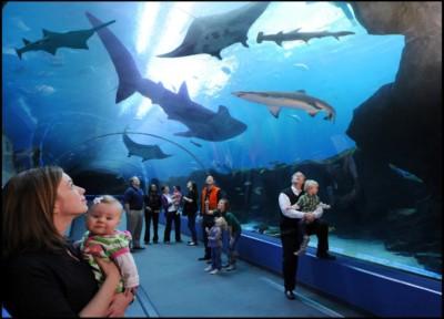 Atlanta Falcons - Georgia Aquarium
